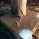 ヤマトシロアリ 束柱加害