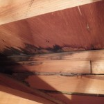 3階天井裏雨漏り 蟻道 イエシロアリ加害