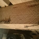 シロアリの被害 大引き