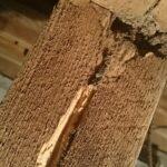 シロアリの被害 束柱